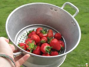 fraises suisses