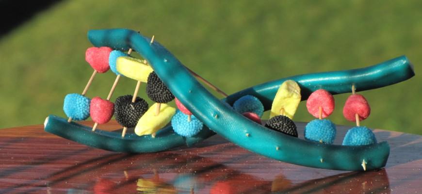 ADN en bonbons