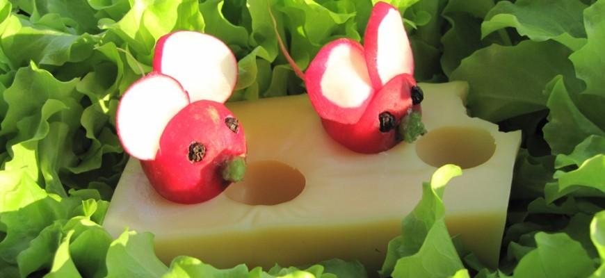radis souris sur un fromage emmental