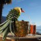 Dessert ananas: comment transformer un ananas en oiseau