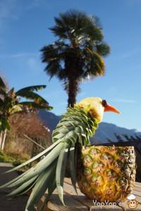 dessert ananas découpé en forme d'oiseau sous les palmiers de Montreux
