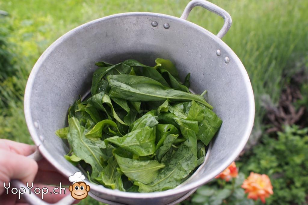 cuisine sauvage] recette du pesto à l'ail des ours - yopyop