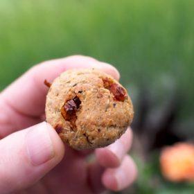 recette cookie parmesan amuse bouche pour apero