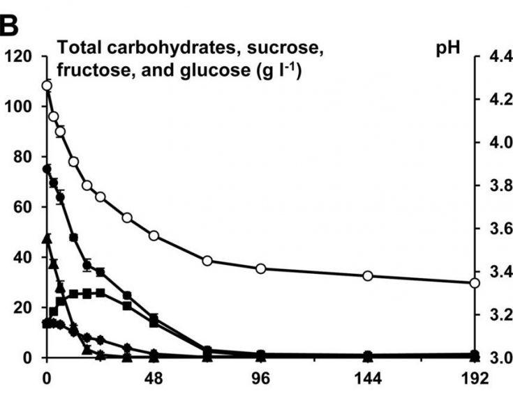 graphe evolution consommation de sucre kefir